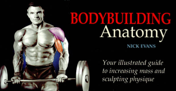 bodybuilding-anatomy